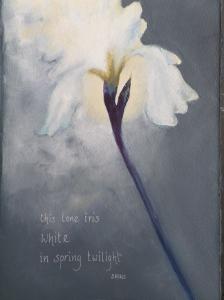 this lone iris white in spring twilight